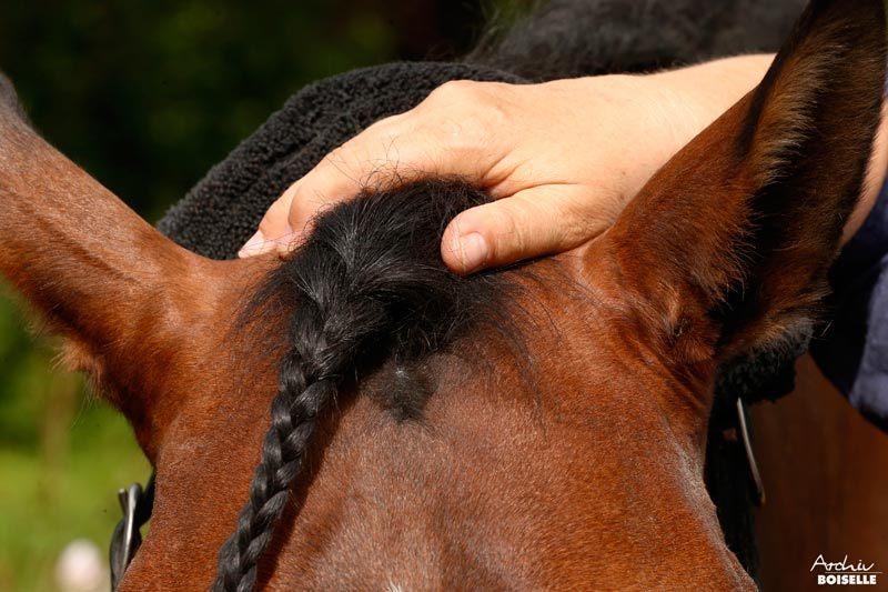 Osteopathische Behandlung eines Pferdes am Kopf