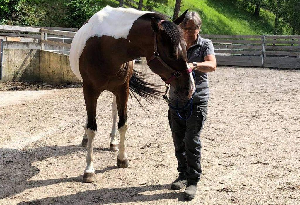 Pferdeosteopathische Behandlung Muffin